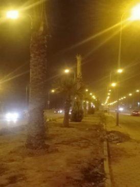 جهاز حدائق أكتوبر يبدأ تنفيذ خطة زراعة النخيل بشوارع وطرق المدينة صرح المهندس محمد مصطفى، رئيس جهاز 56151