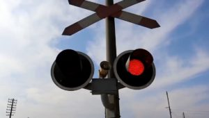 قررت هيئة السكة الحديد، الدفع بعدد 170 قطارًا إضافيًا بإجمالى 131736 مقعدًا، بالإضافة إلى القطارات المجدولة