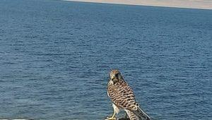 البيئة تنظم 4 حملات تفتيشية مكبرة لمحاربة الصيد غير المشروع للطيور المهاجرة بالفيوم  د ياسمين فؤاد : إزالة 14
